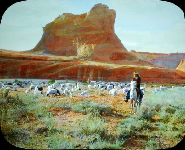 Navajo sheepherder with sheep