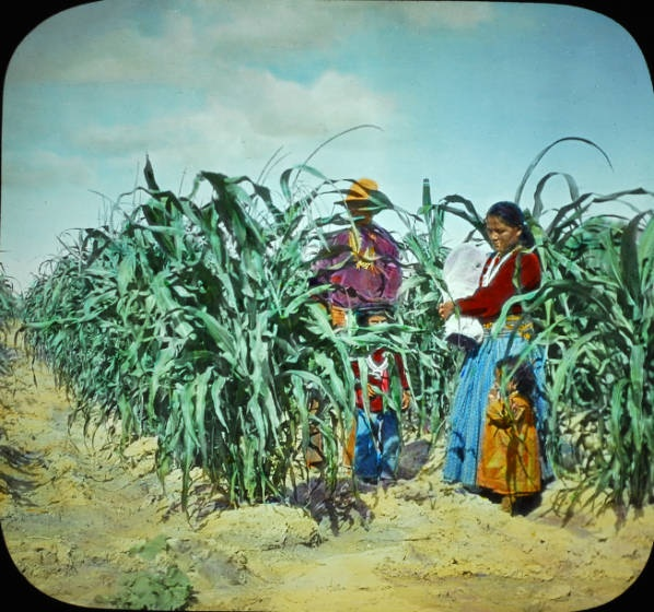 Navajo family in a corn field in northern New Mexico