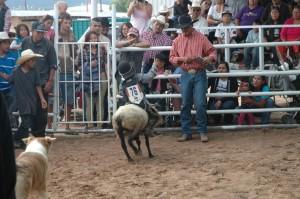 Navajo-Wooly-Riding 004