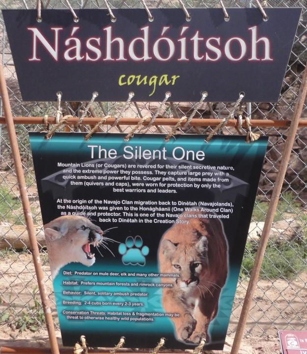 Cougar - Náshdóítsoh Navajo Protector