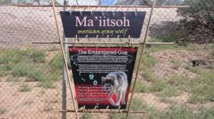 Gray Wolf Navajo Protector