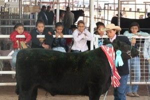 Navajo Nation Fair Junior Livestock Show & Sale