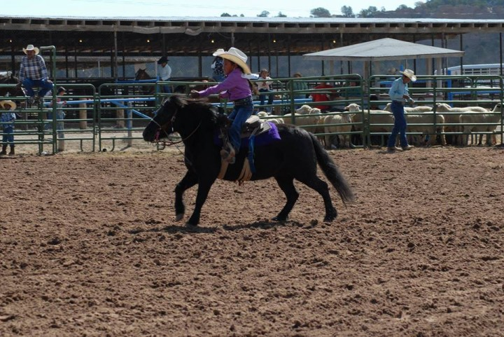 Navajo Nation Fair Open Junior Rodeo