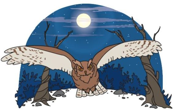 Owl and Woodpecker - A Navajo Tale