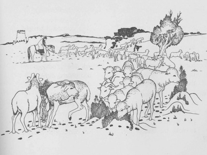 The Sheep in Winter – Navajo Language Lessons