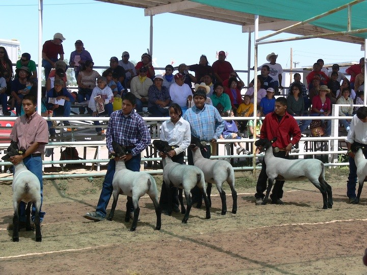 Junior Livestock Show & Sale at the 2015 Navajo Nation Fair
