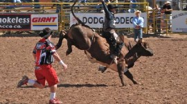 Bull Riding Navajo Fair