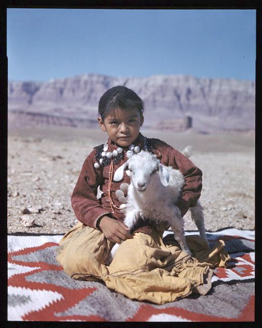 Navajo Child With Lamb C 1950s