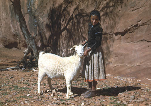 navajo girl with goat