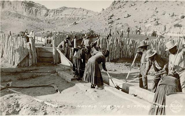 Navajo Men and Women Dipping Sheep. [ca. 1920]
