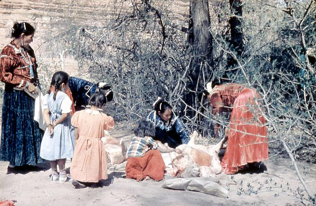 Navajo Women And Children Outside Cutting Mutton 1950s
