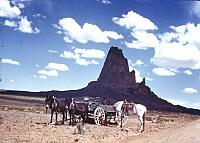 Horses and carriage in the desert