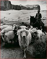 Sheepherder on horse in Monument Valley, 1969