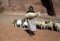 Navajo Girl with Lamb in her arms